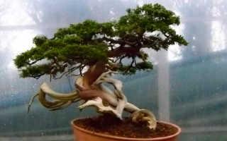 Дерево в интерьере по фэн шуй