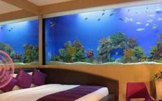Количество рыбок в аквариуме по фэн шуй