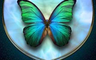 Бабочки в доме по фэн шуй