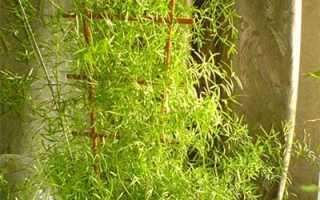 Растения для кухни по фэн шуй