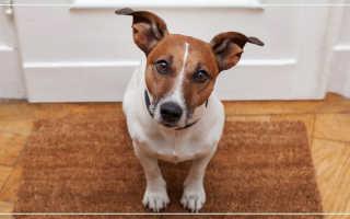Фэн шуй гороскоп собака