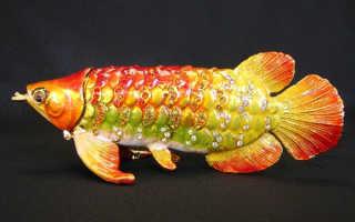 Рыба по фэн шуй арована