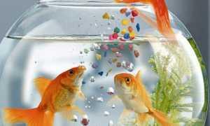Картина с рыбами по фэн-шуй