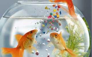 Золотая рыбка статуэтка по фэн шуй