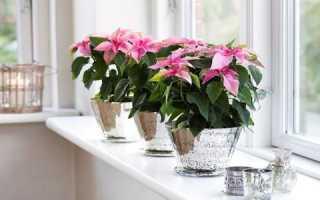Цветы которые нельзя держать в доме по фэн шуй