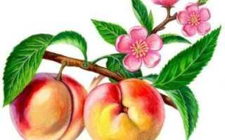 Фэн шуй цветок персика