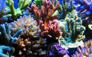 Коралл по фэн шуй