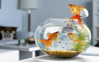 На кухне по фэн шуй аквариум