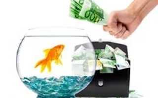 Золотые рыбки по фэн-шуй для денег