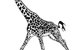 Жираф символ чего по фэн-шуй