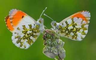 Фэн-шуй что означают бабочки по