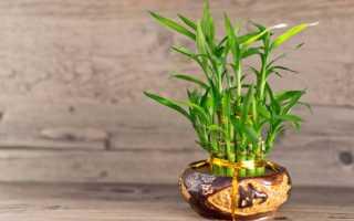 Сколько бамбука должно быть в доме по фэн шуй