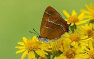 Фэн-шуй коричневый цвет