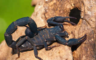 Скорпион фэн шуй