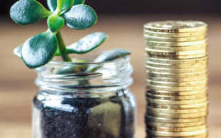 Сколько монет должно быть на денежном дереве по фэн-шуй