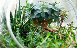 Растения для денег по фэн-шуй