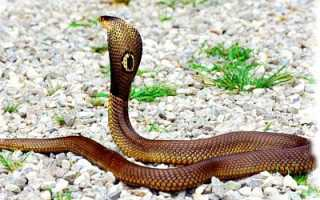 Змея значение фэн-шуй
