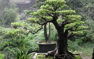 Стихия дерево фэн шуй